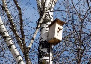 Акция «Скворечники! Подарим птицам дом»