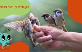 Экологический час  «Интересно о птицах»